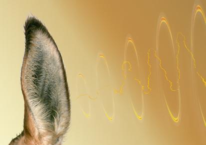 oreille et son
