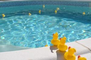 canard piscine baignade