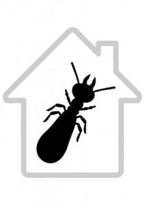 Les termites et le batiment (dtour)