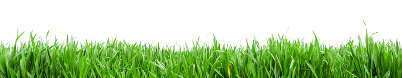 View of Grass in high definition isolated on a white background