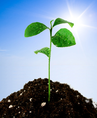 Plant in soil and blue sky with sun